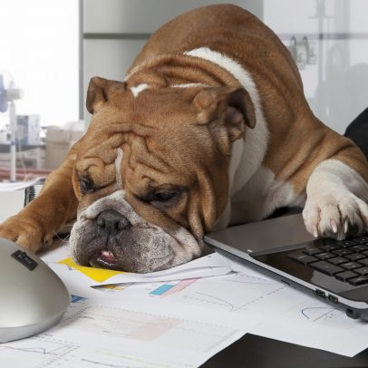 The Rising Trend of Pets in the Workplace