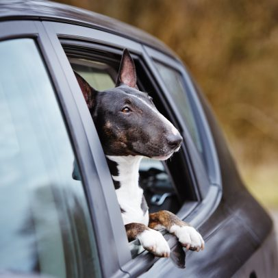 Don't Leave Your Dog in a Hot Car This Summer