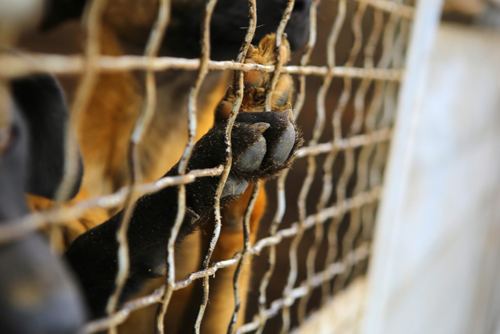 Vet who Aided Illegal Puppy Trade Scam Avoids Prison