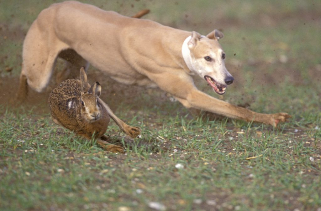 Lincolnshire Police Combatting Hare Coursing