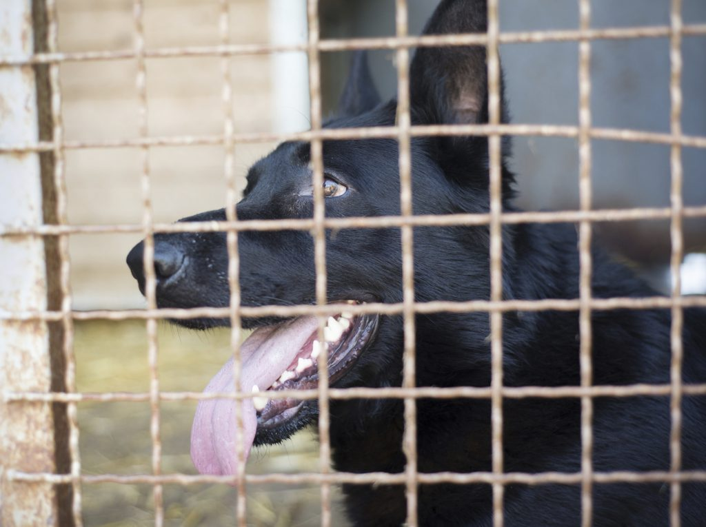 Dog Rescue Centre Condemned by Volunteers