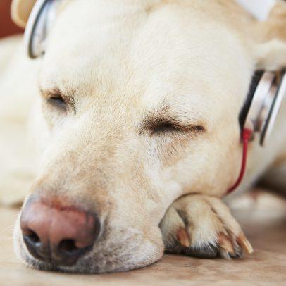 dogs generally don't like loud sudden noises like fireworks
