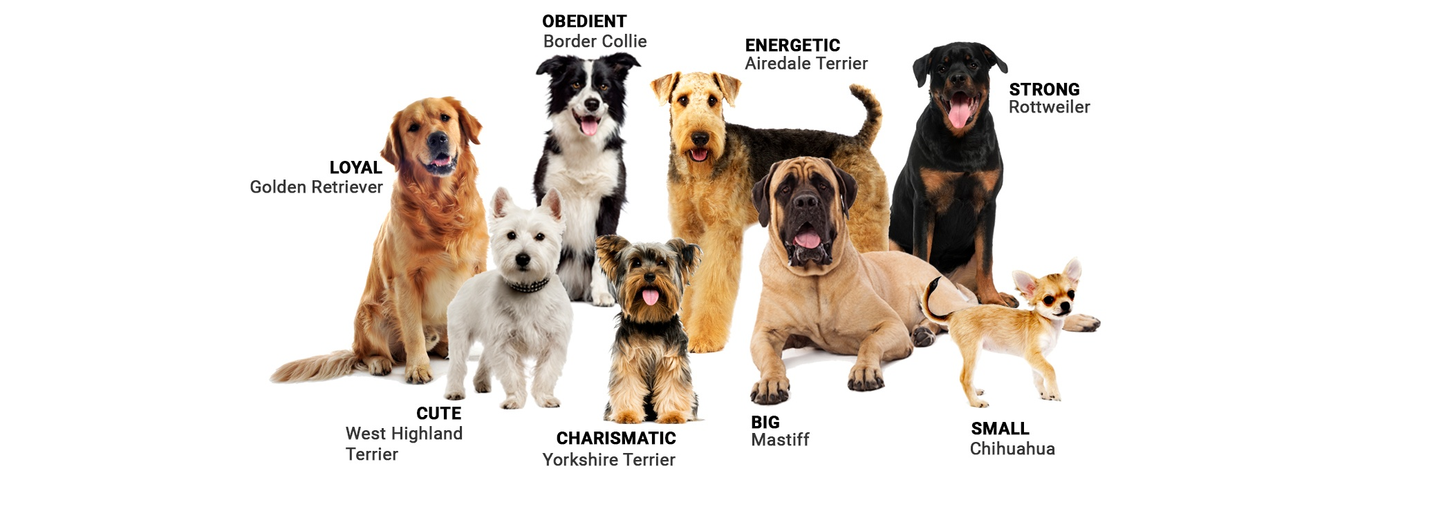 Dog Breeds - Which is Yours?