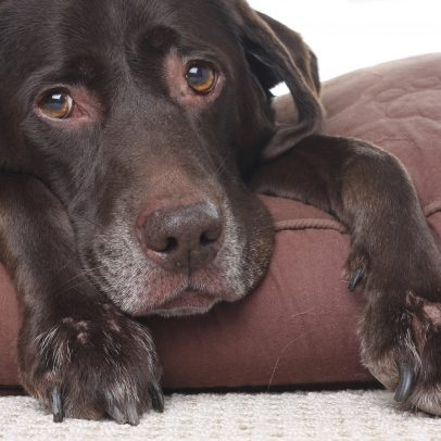 Britain's First Hospice for Dogs has been Launched