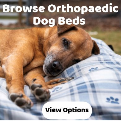 Orthopaedic dog beds - best selling - wide range