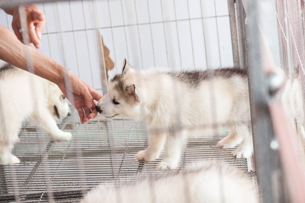 Why Does the New Legislation for Pet Shops Matter?