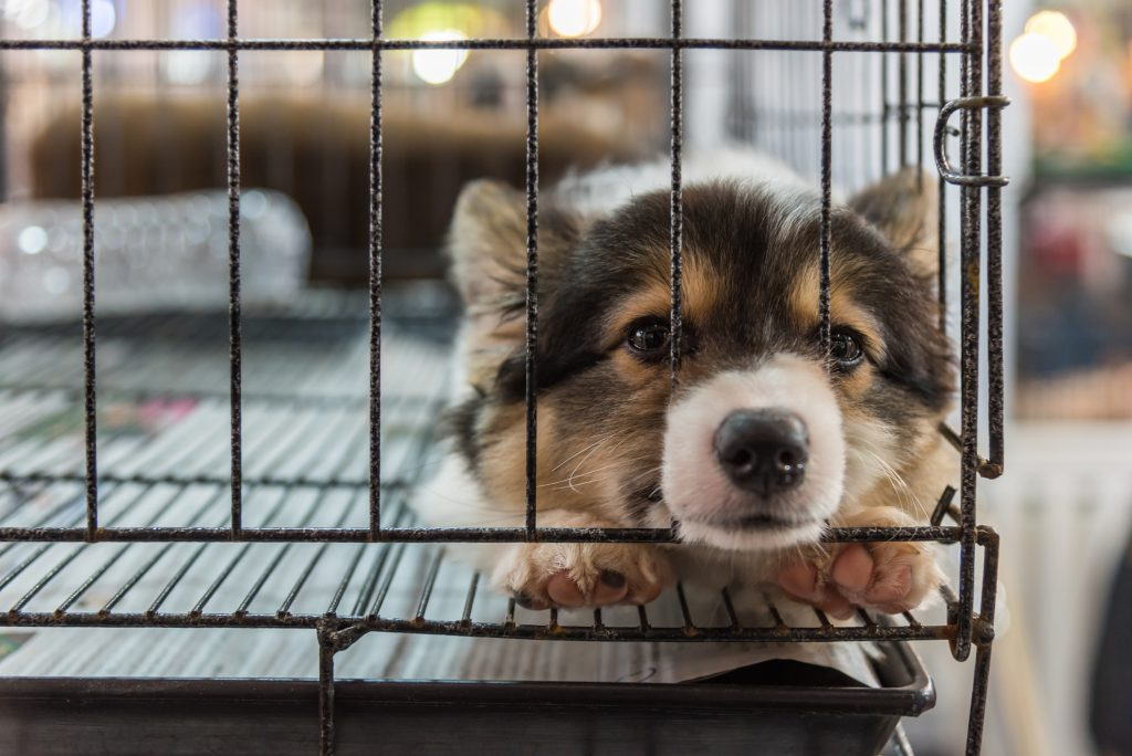 Government Incentive Bans the Sale of Puppies in Pet Shops