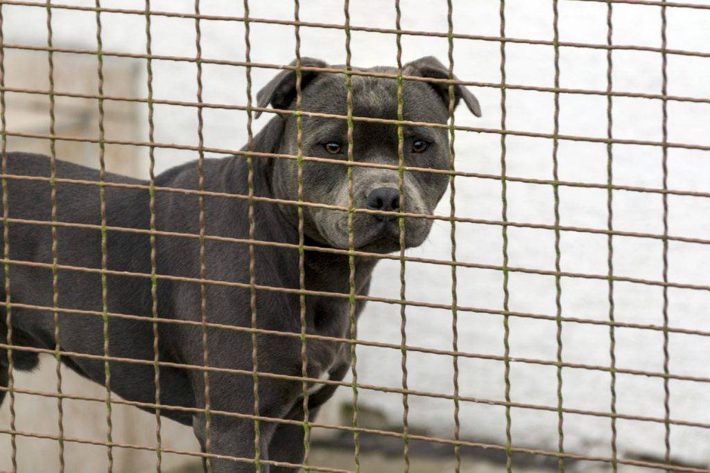 Charities Urge Repeal of the Dangerous Dog Ban