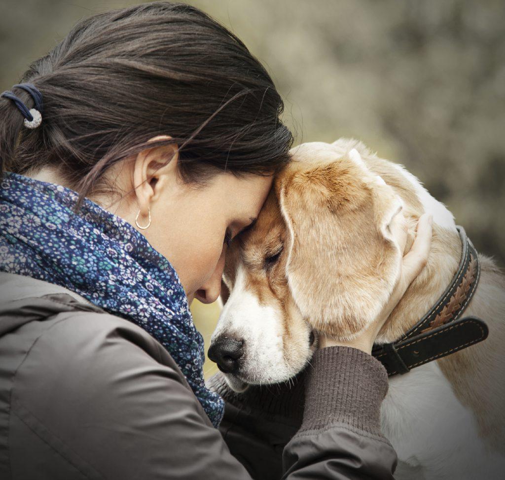 Microchipping a dog can reunite you