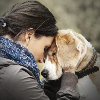 Microchipping a dog can reunite you