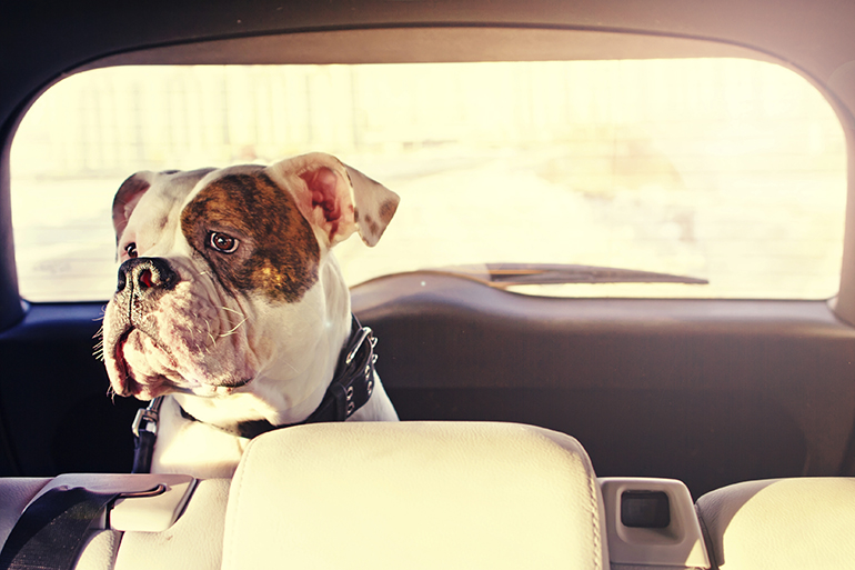 RSPCA issues reminder not to leave dogs in cars as temperatures soar