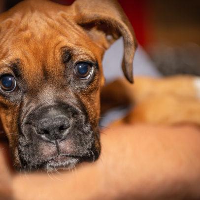 UK Dog Charities